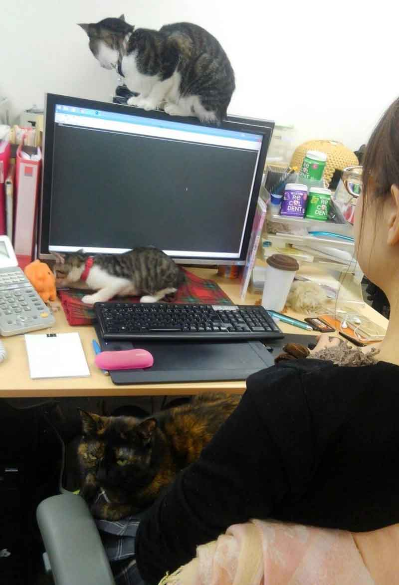 Japanese Company Pays Employees Cat Rescue Ferray Corporation