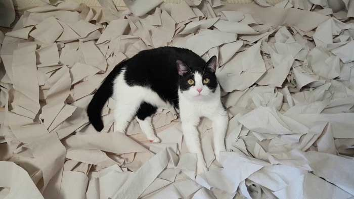 Pusic cat toilet paper
