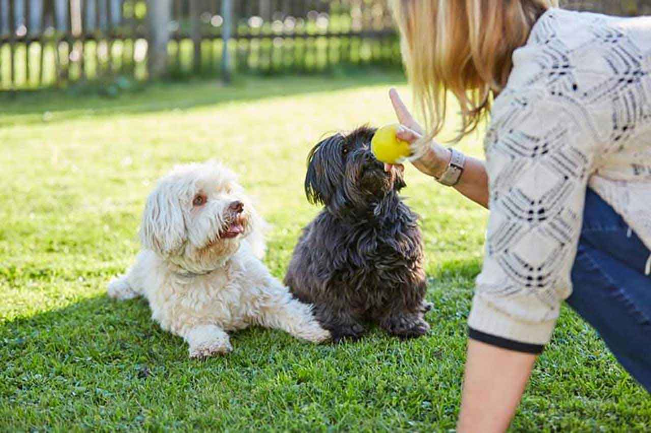 Dog training Cultivate obedience in dogs