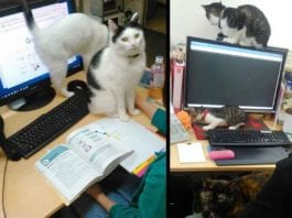 Japanese Company Paying Employees Cat Rescue