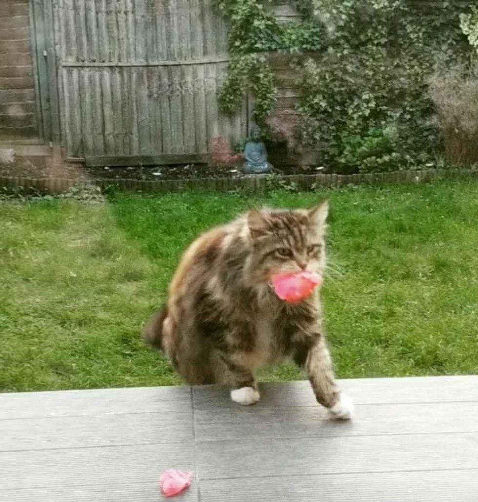 Willow cat brings flowers neighbors