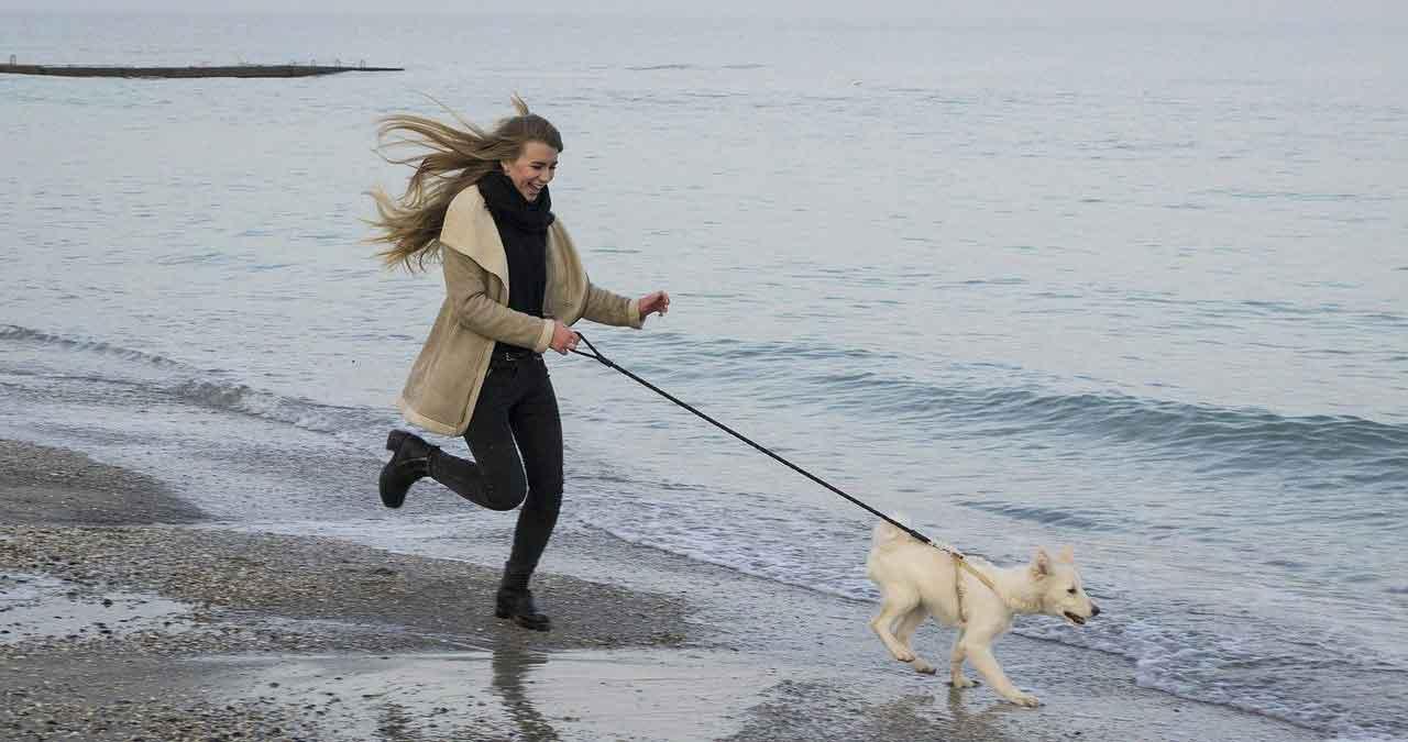 Stop Dog Chasing Things