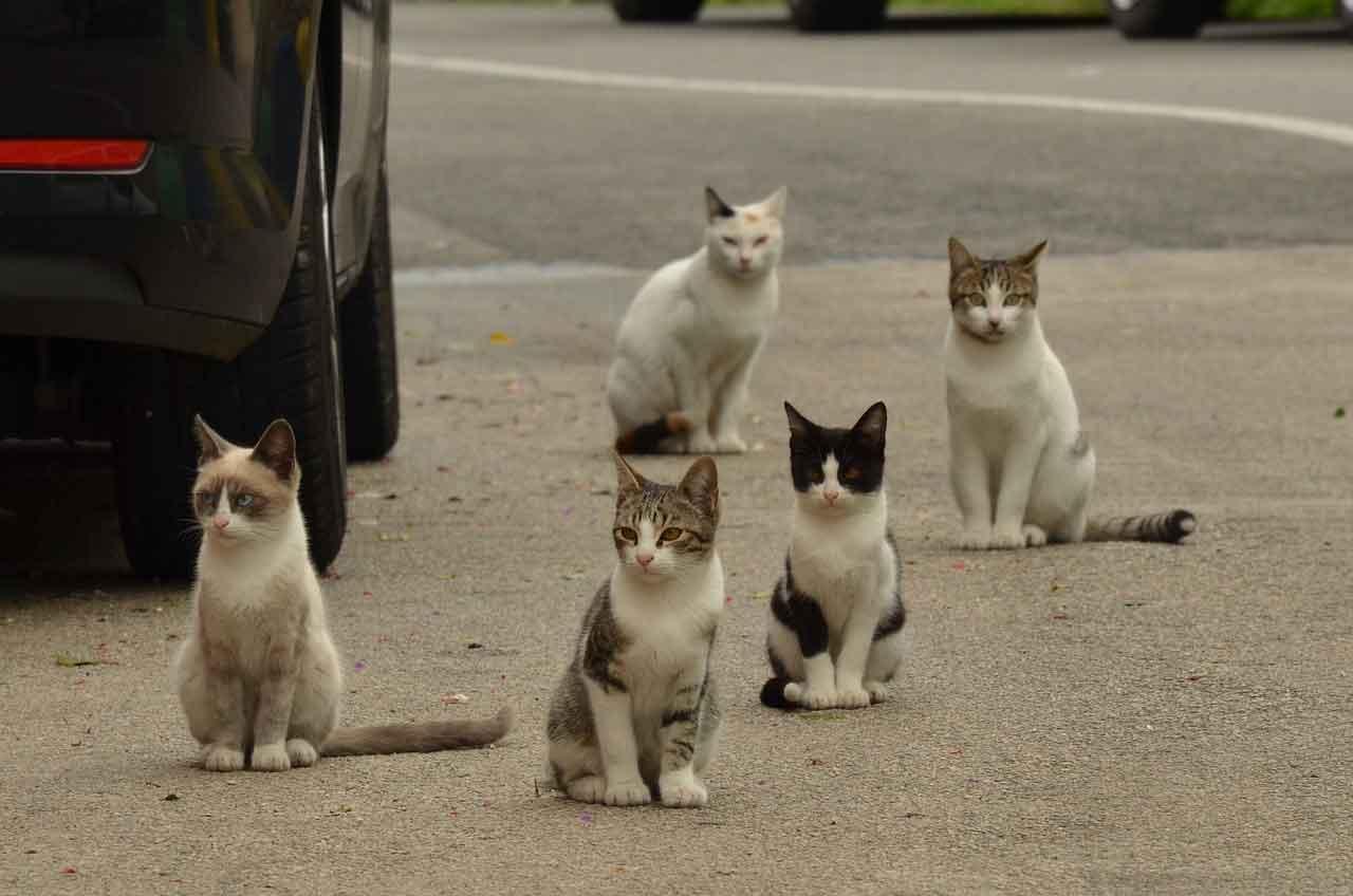 New Australian law pets