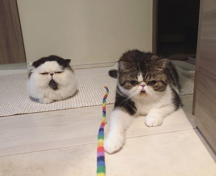 Zuu The Cat Round