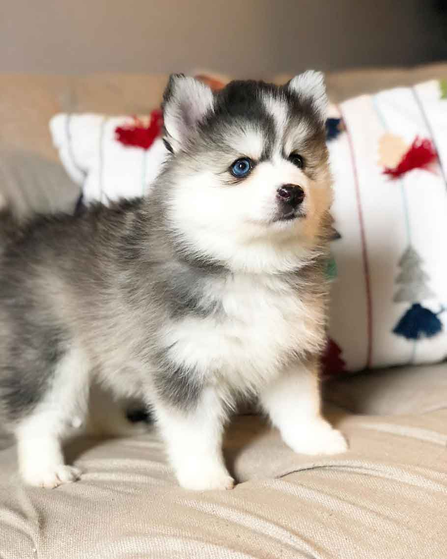 Cute unique Cross-Breed Dogs