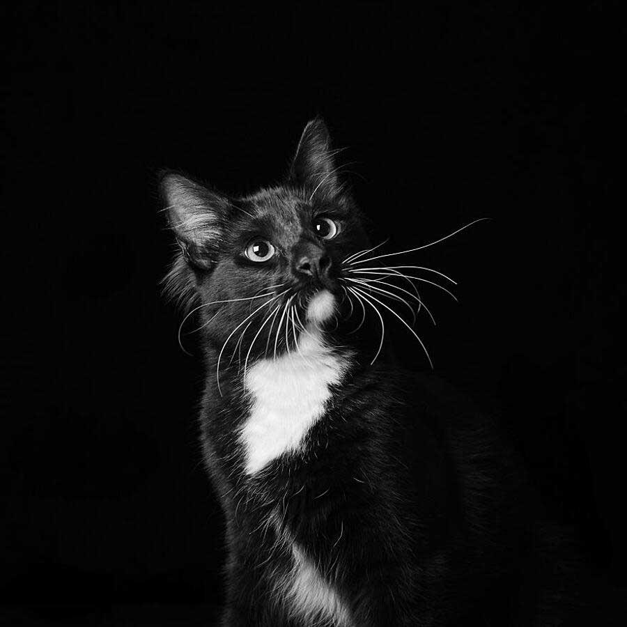 Adopt back dog cat