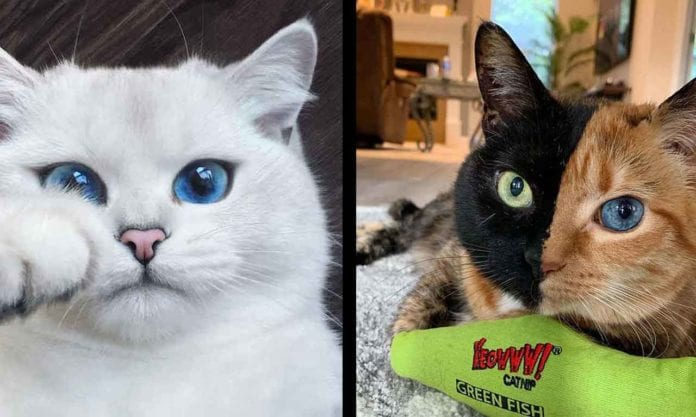 Stunning Cats With The Most Beautiful Eyes