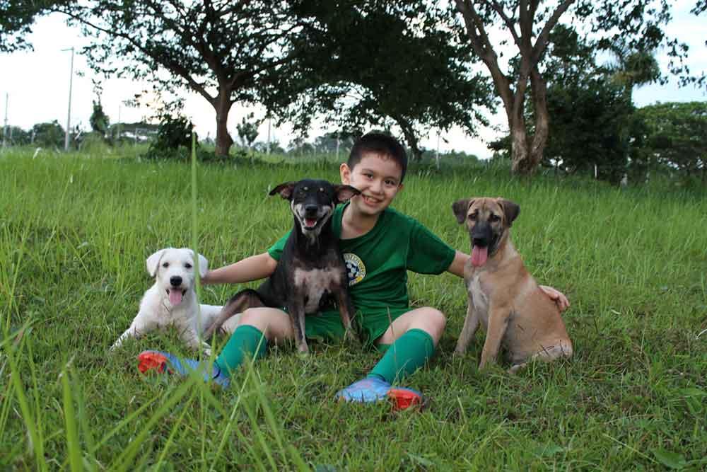 Ken Amante happy animals club stray animals shelter pocket money dream