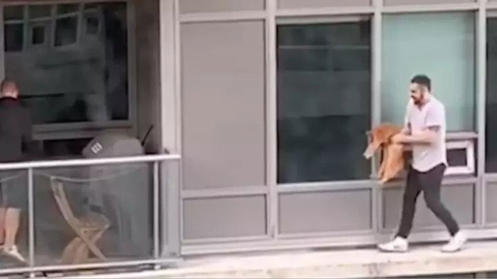 Man Risks His Life To Rescue A Cat