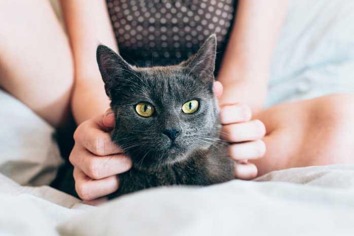 Professional cat cuddler