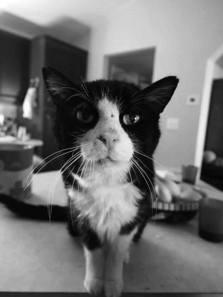 Dexter 20 years old cat finds home