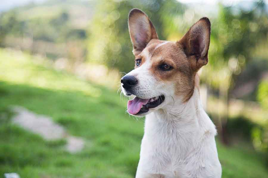 Adopting shelter dog