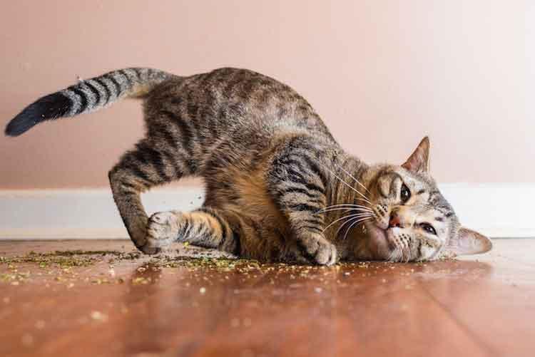 Andrew Marttila CATS ON CATNIP