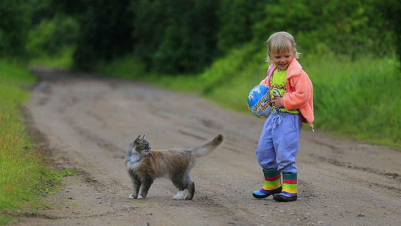 best cat breeds kids