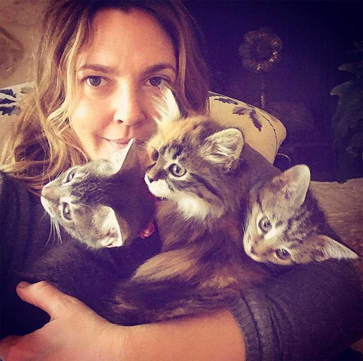 Celebrities Cats Drew Barrymore cat Fern