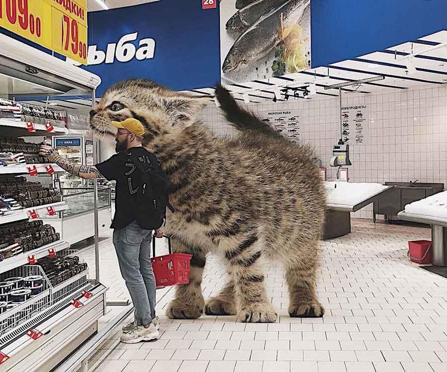 Giant cats russian artist Andrey Scherbak