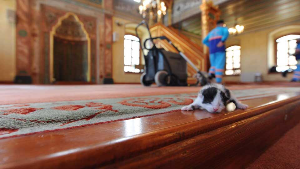 Imam Istanbul turkey opens mosque stray cats