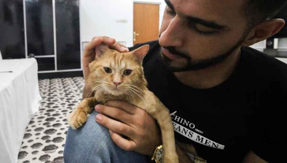 Iraq cats hotel