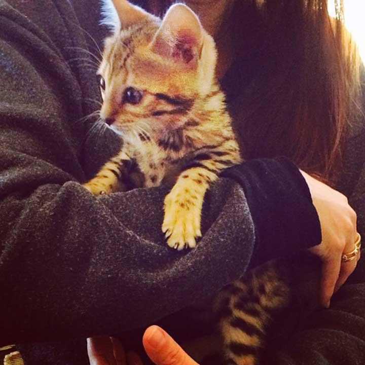 Celebrities Cats Kourtney Kardashian Charli cat