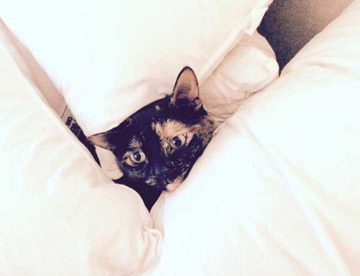 Celebrities Cats Lea Michele cat Sheila