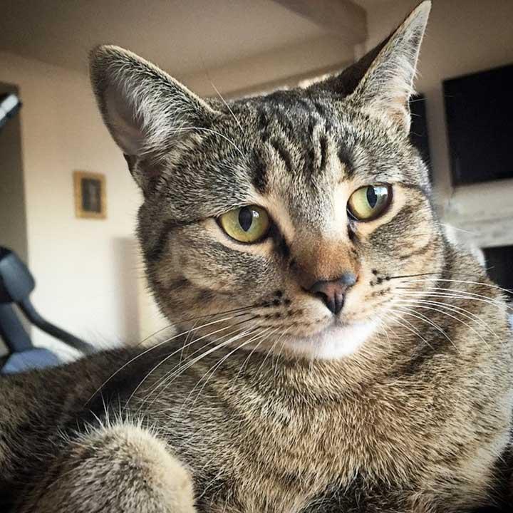Celebrities Cats Macklemore cat Cairo