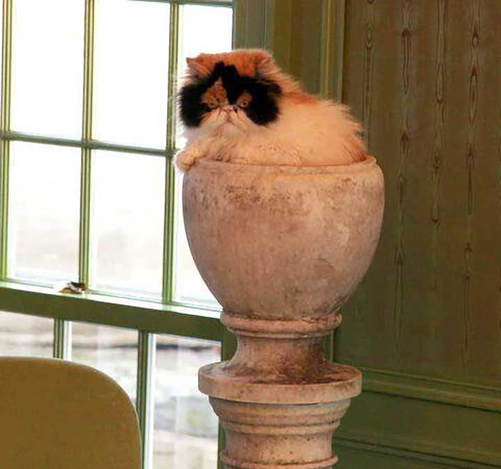 Celebrities Cats Martha Stewart cat Princess Peony
