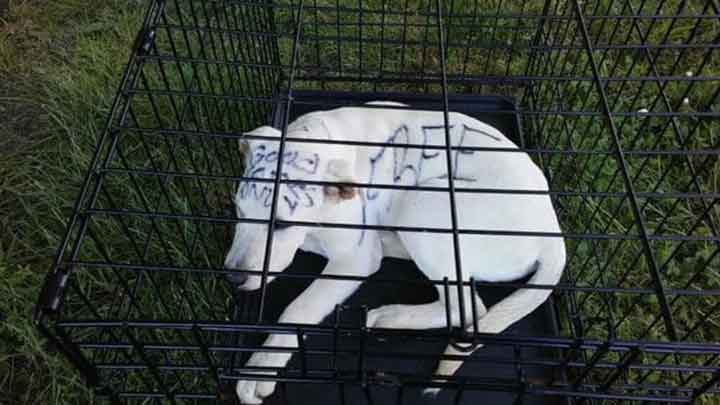 Marvella Abandoned Puppy In Park Chillicothe Ohio