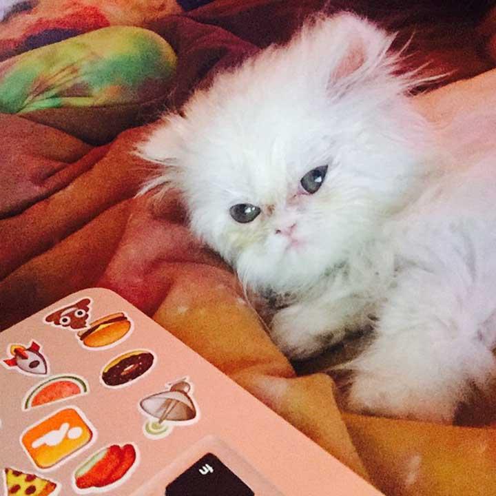 Celebrities Cats Miley Cyrus cat Shanti Om Bb
