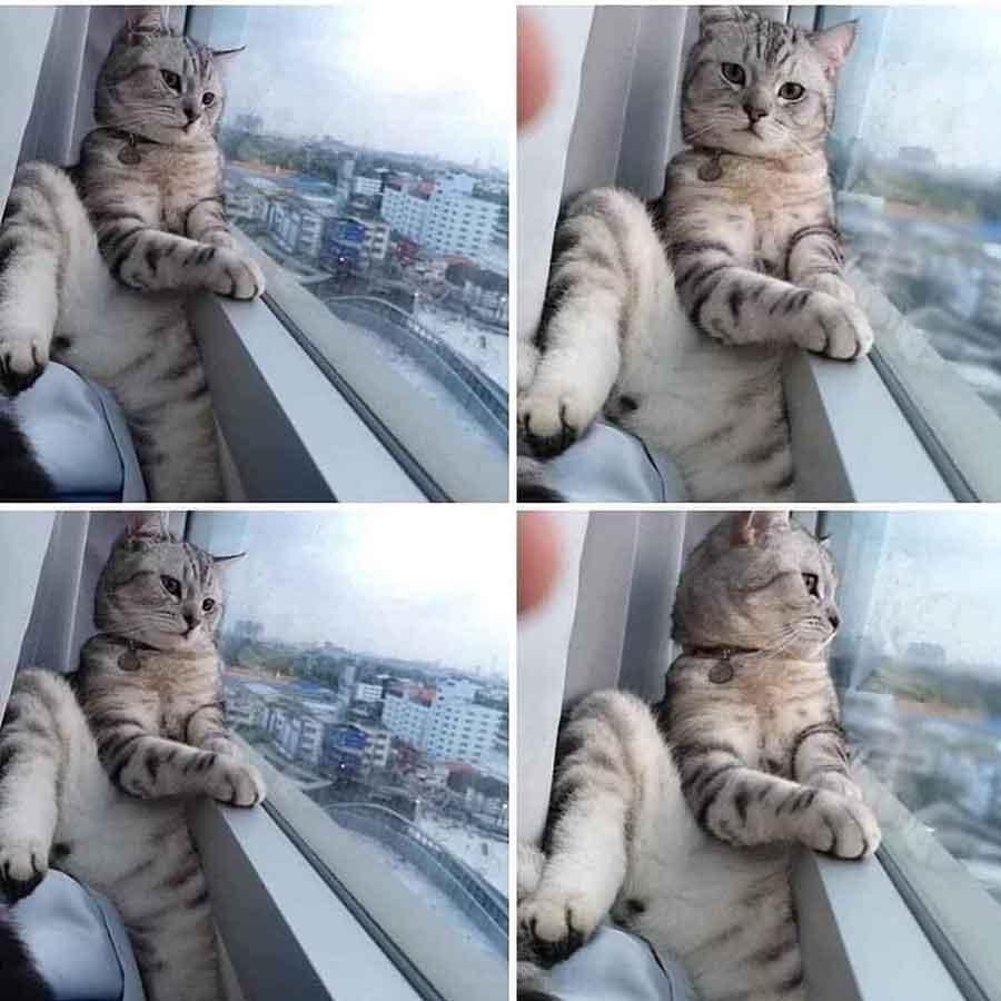 Pets Selfies