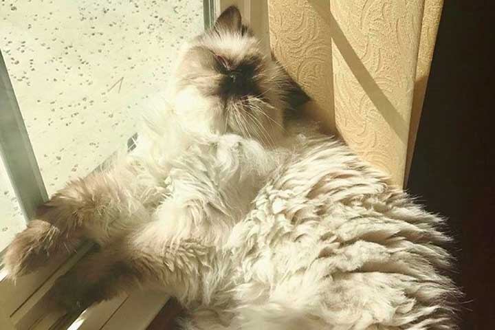 Celebrities Cats Peyton Clark cat Cotton