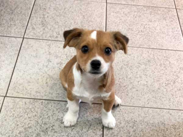 Puppy Terra hairless saved beautiful fur