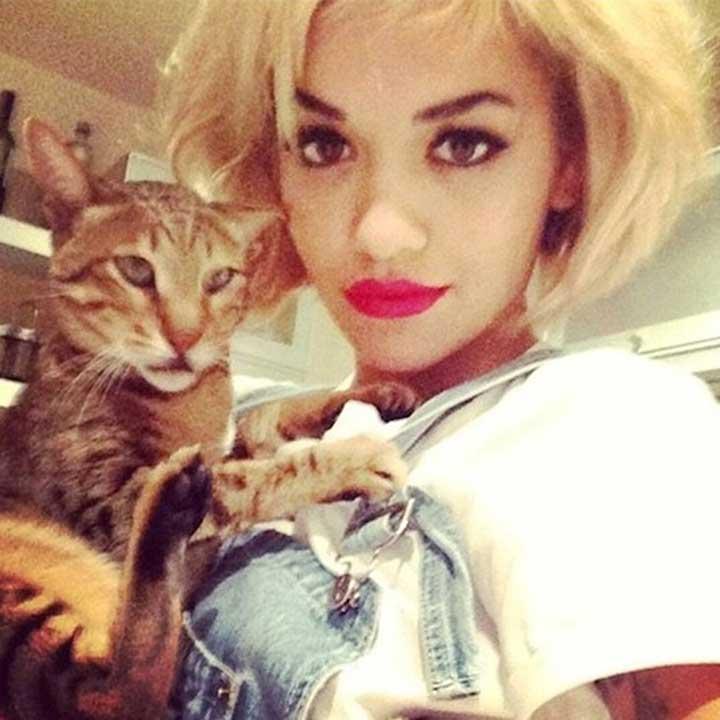 Celebrities Cats Rita Ora Bruno The Cat