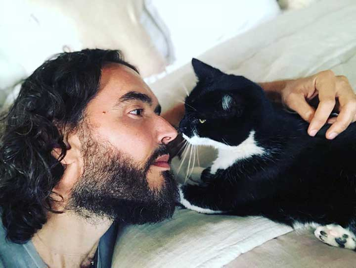 Celebrities Cats Russell Brand cat Morrissey