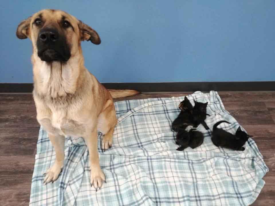 Serenity stray dog saved cold abandoned kittens Ontario