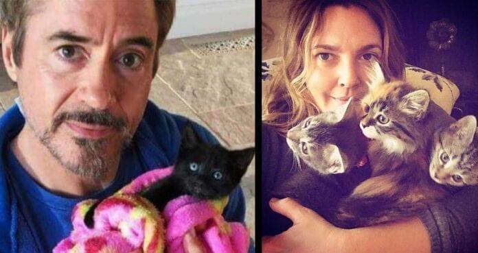 cats celebrities