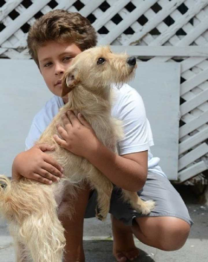 Jean Fernandes 11 years old rescues a dog Brazil accident