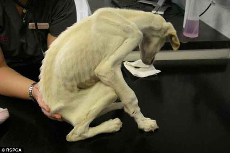 Rachel Butler Chris Mallett william RSPCA greyhound saluki crossbreed dog saved Coventry