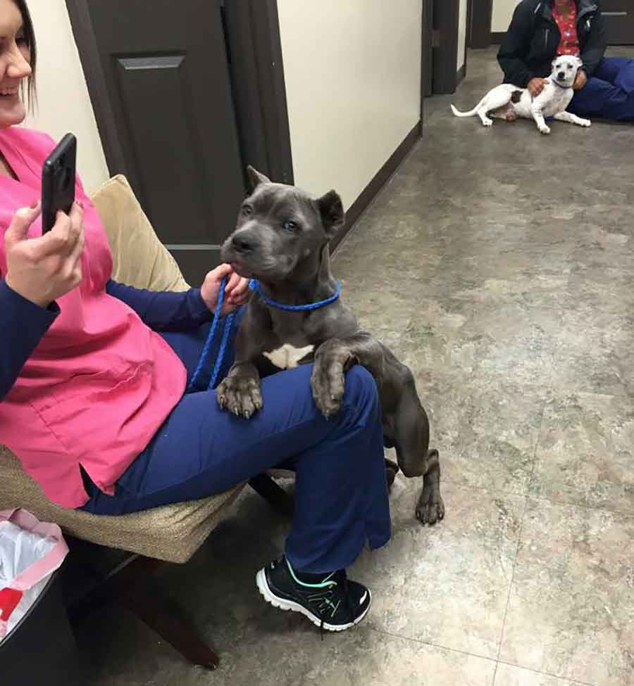 Second Chance Rescue NYC Dogs Gargoyle Landis pitbull cage Deformed