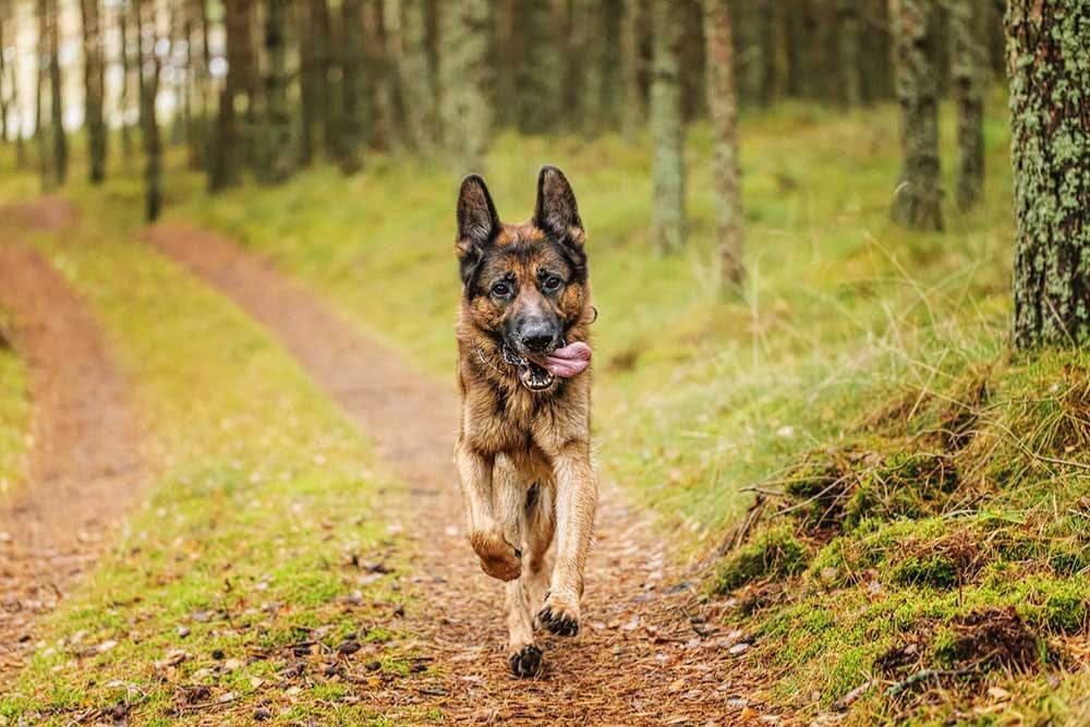 Zodiac Sign dog