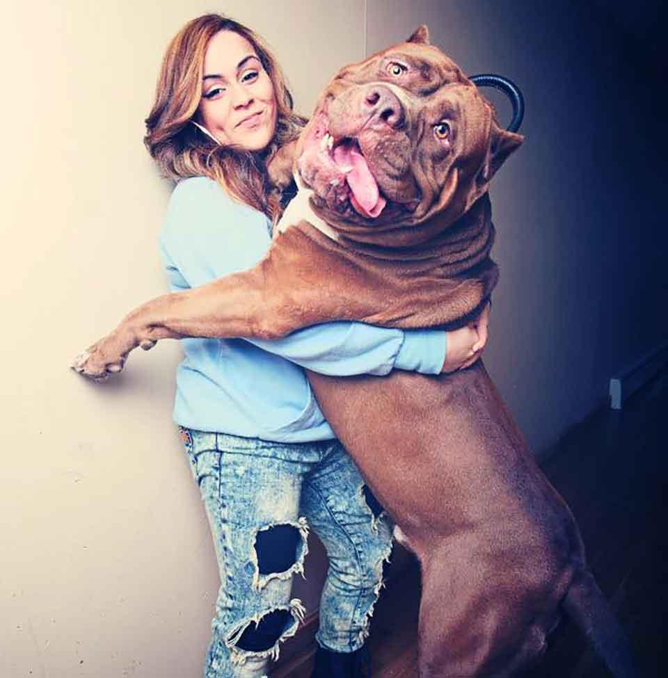 big huge dogs