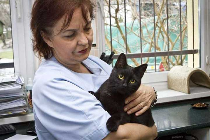 cat nurse veterinarian shelter animals Radamenes poland
