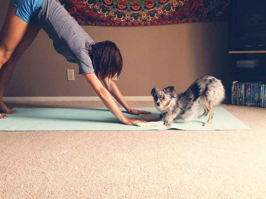 dog yoga funny