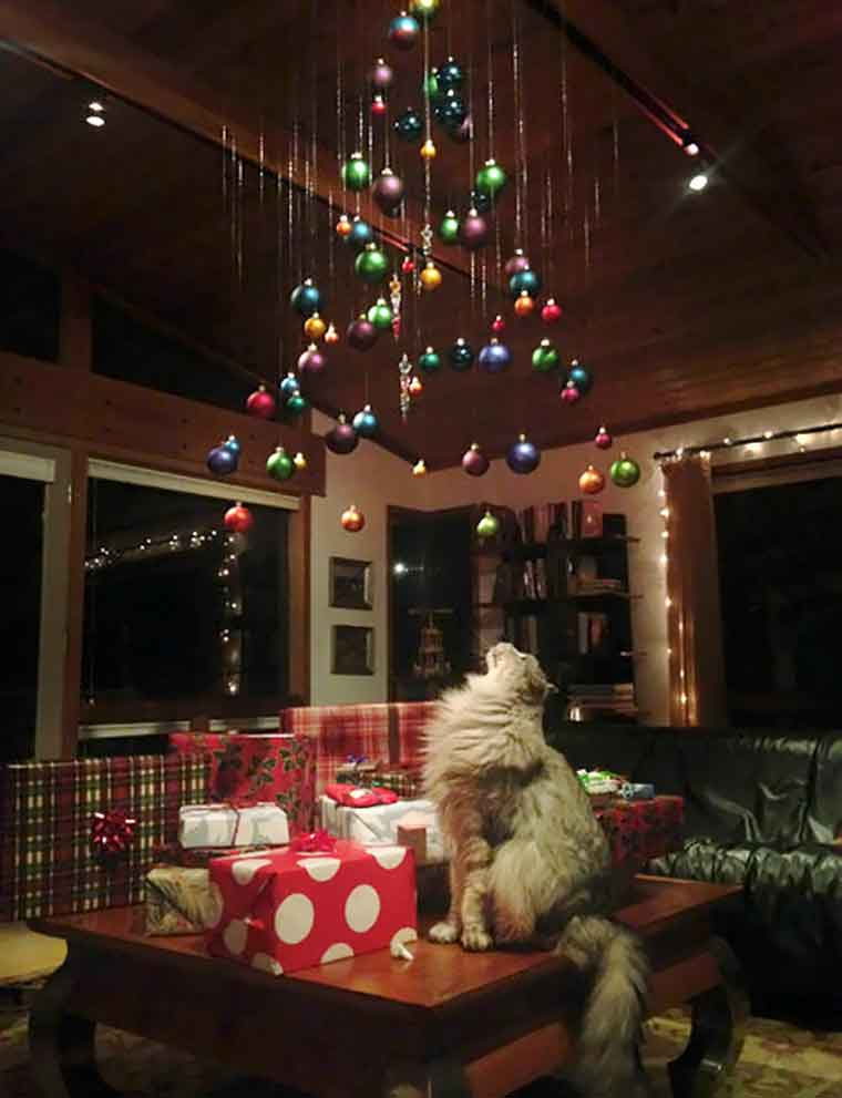 geniuses protect Christmas tree cats dogs
