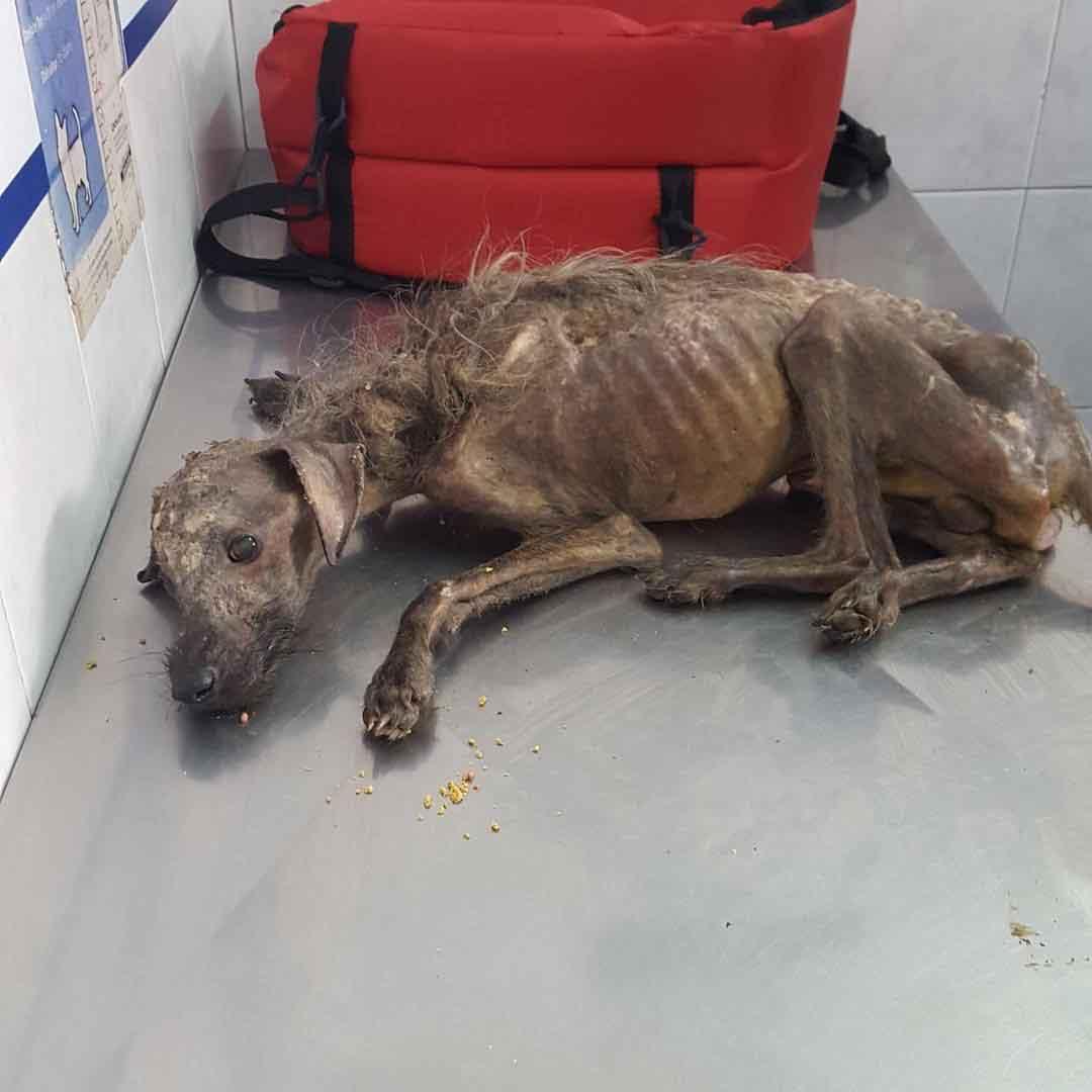 Hercules Pia Rescue Street Dog argentina
