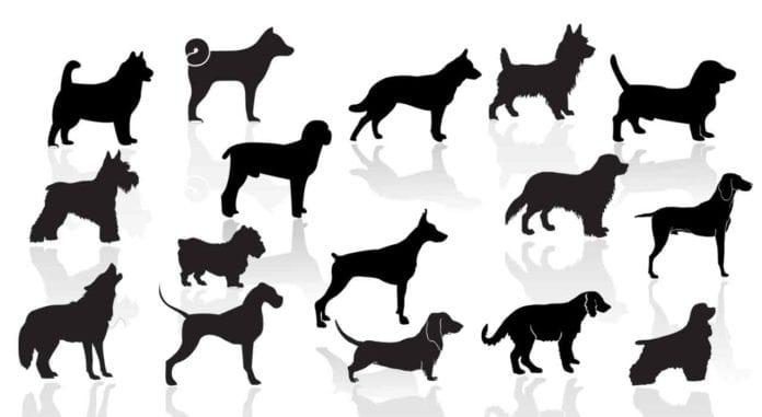 identify breed dog
