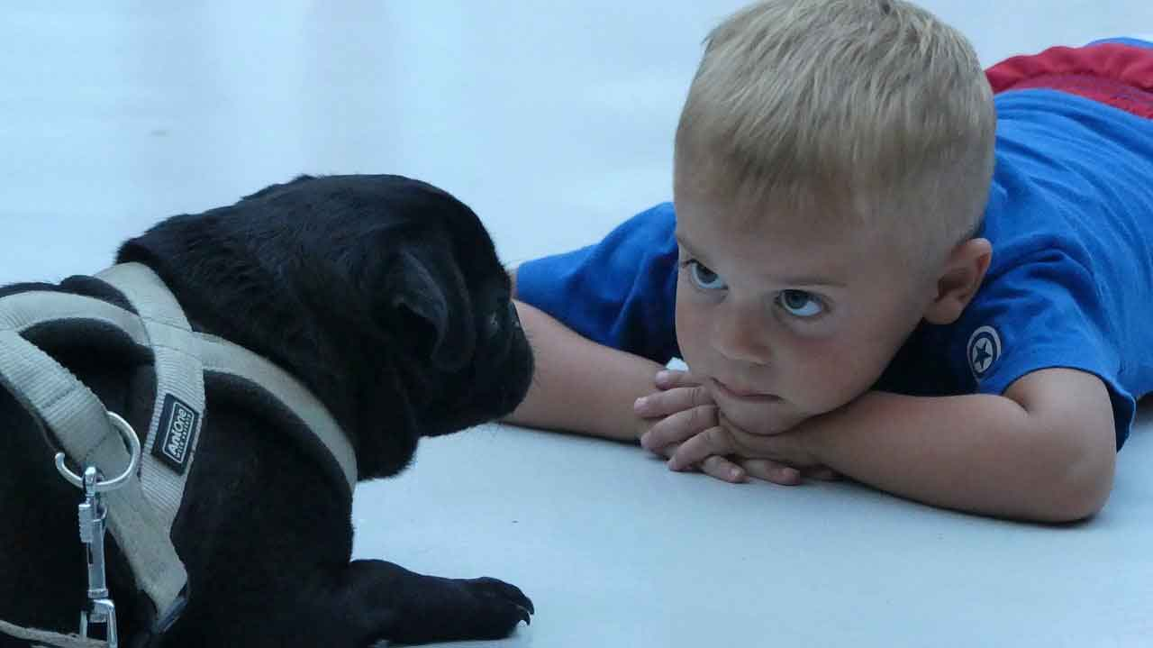 Autistic children and pets,