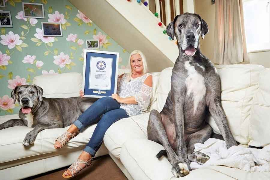 Freddy the biggest dog in the world Guinness World Records