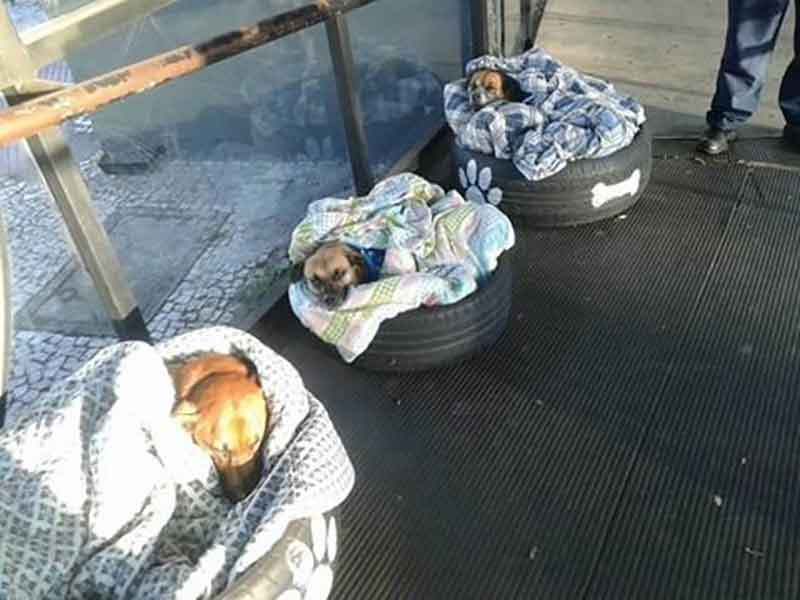 Greece, Turkey and Brazil stray dogs sleep help winter