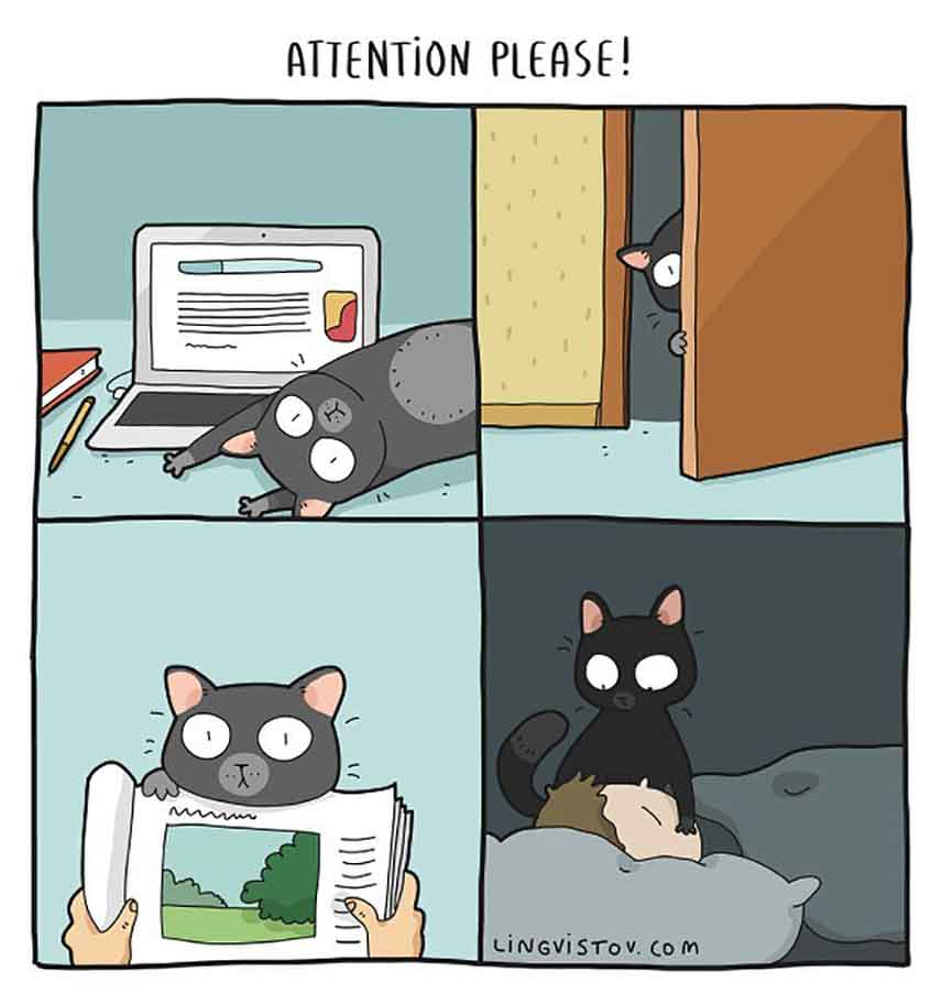 Landysh et Asia Lingvistov cats illustrations comics daily life