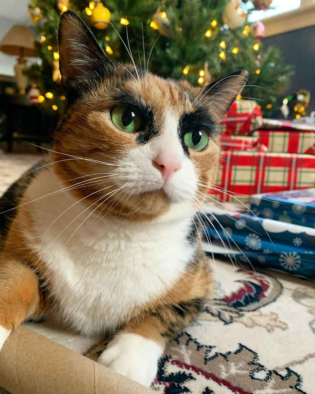 Lilly cat rare eyebrows judging calico Cara Delevingne Eugene Levy
